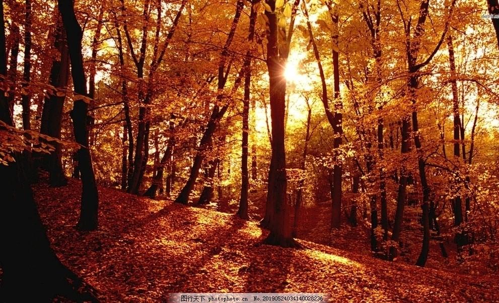 秋日的枫叶林唯美意境
