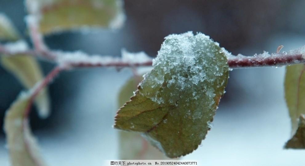 冬天雪景樹枝