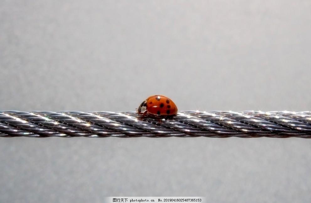 动物世界,昆虫,甲虫,红色,小,幸运瓢虫,运气