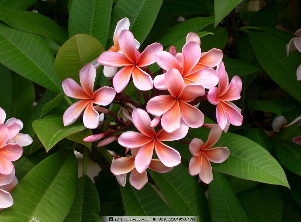 美丽,背景,自然,赏花,花花开,花图片,春游