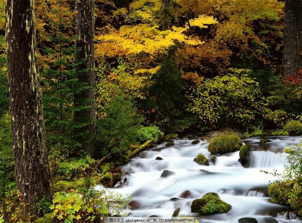 溪水河流,树木,自然,树林,奇幻,岩石,黄昏
