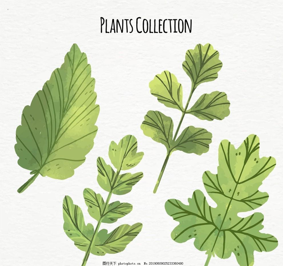 彩绘绿色树叶,叶子,矢量,植物,设计,生物世界,树木树叶