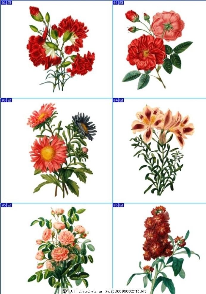 复古手绘植物花卉插画,复古花卉,婚礼邀请函,花海,装饰花卉,绿色植物,装饰画